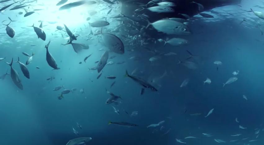dans-ta-pub-shark-dive-samsung-australia