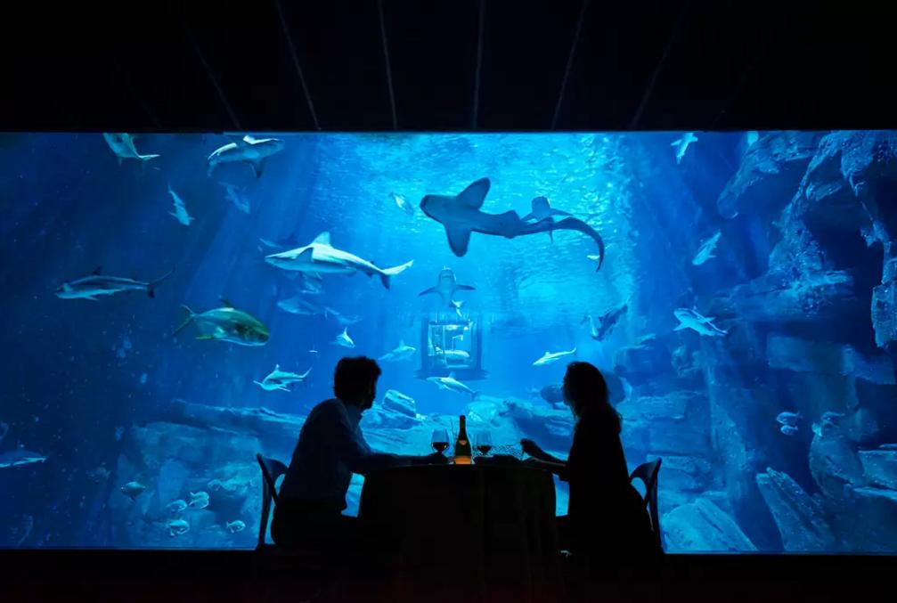 dans-ta-pub-airbnb-ubi-bene-aquarium-paris-chambre-requin-4